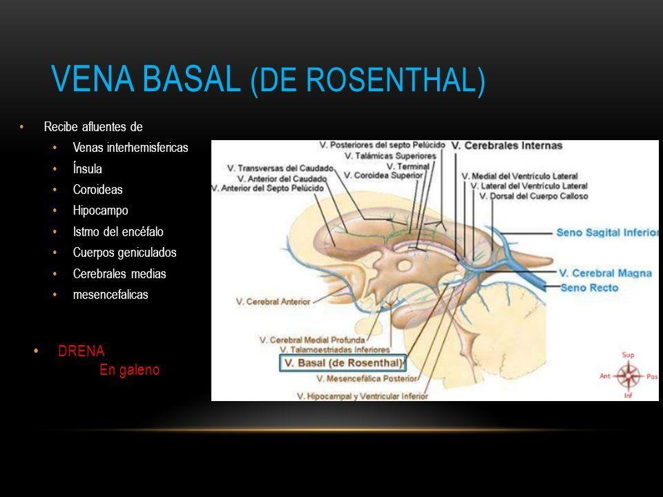 Famoso Vena De La Anatomía De Galeno Bosquejo - Imágenes de Anatomía ...