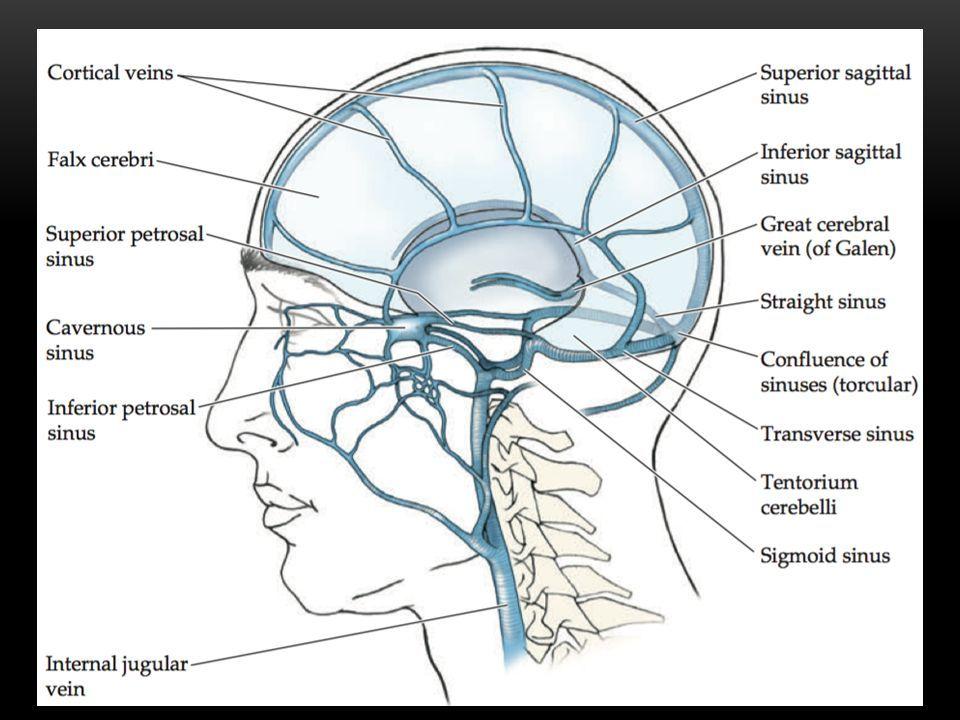 Hermosa Anatomía Cerebral Seno Venoso Composición - Anatomía de Las ...