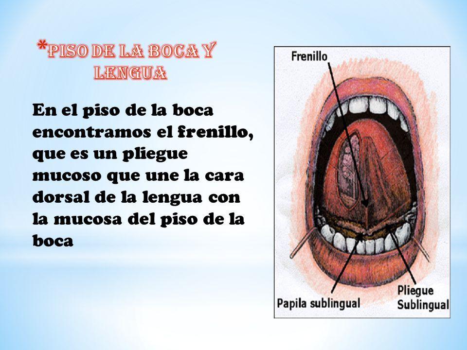 Lujo Anatomía De La Boca De La Rana Ideas - Imágenes de Anatomía ...