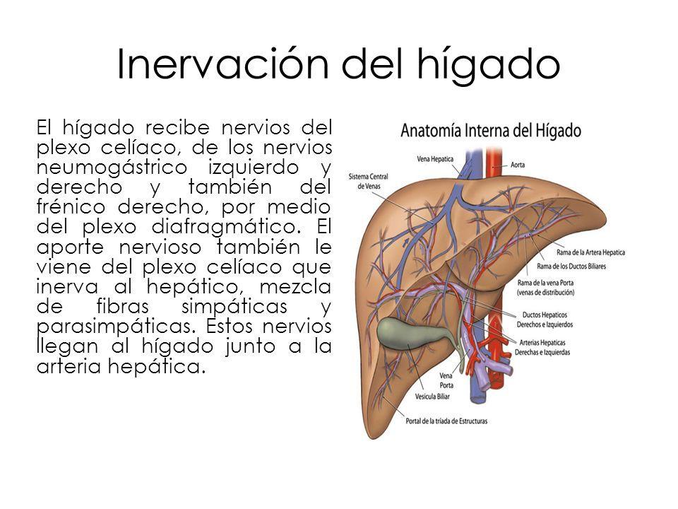 Palafox Castillo Elizabeth E objetivos Generalidades del hígado ...