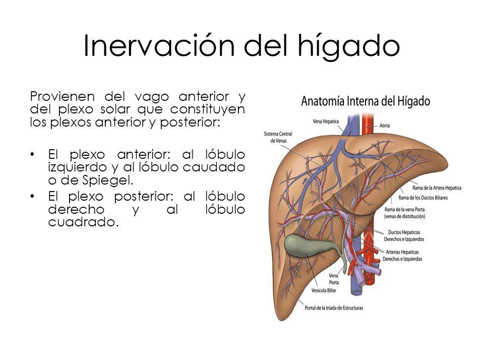 Único Anatomía De La Tríada Portal Viñeta - Anatomía de Las ...