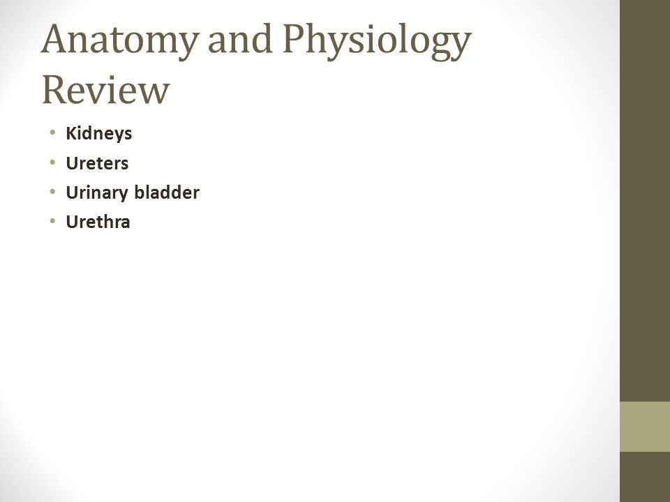 Assessment of the Renal/Urinary System. Anatomy and Physiology ...