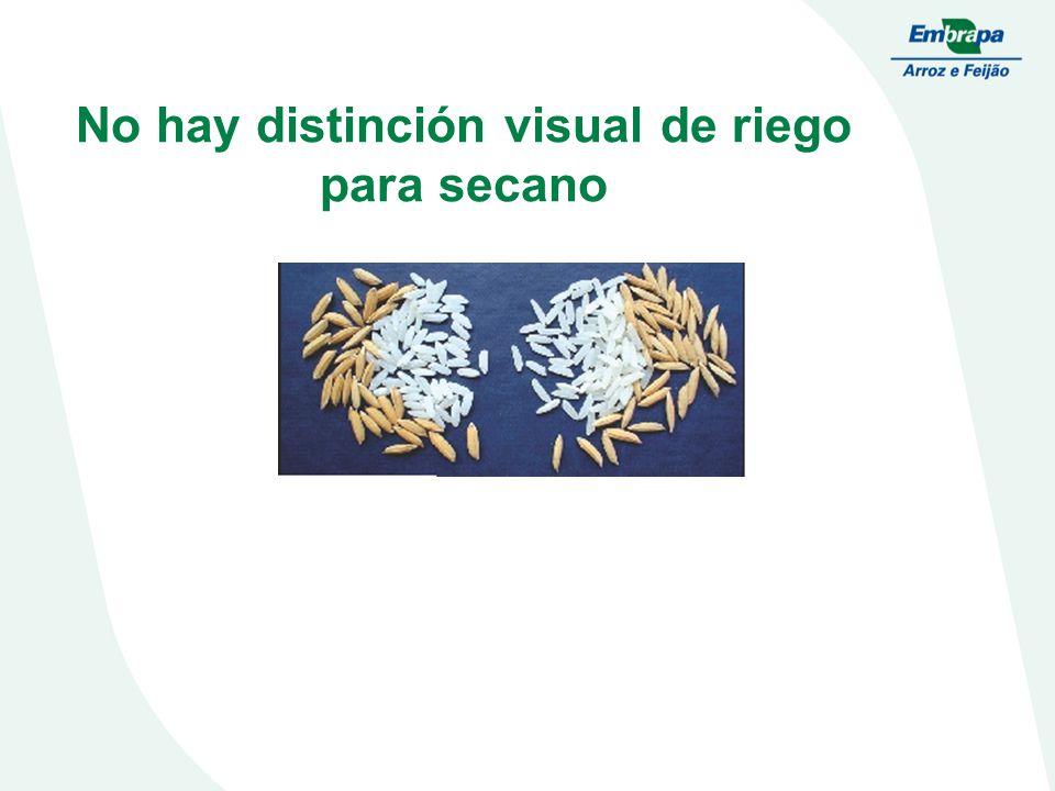 No hay distinción visual de riego para secano