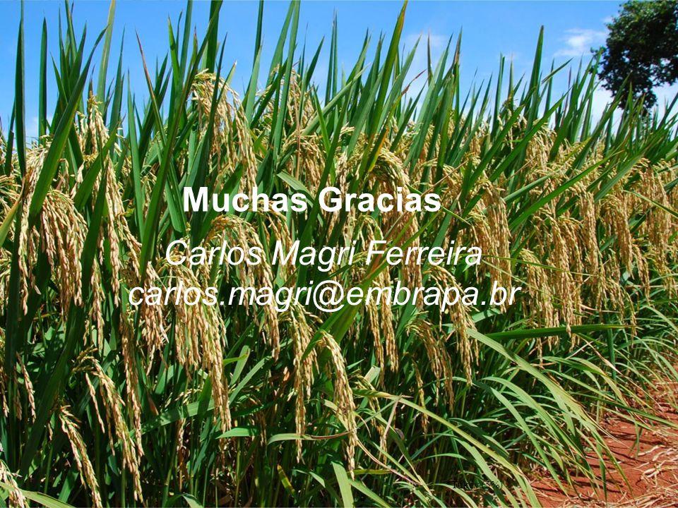 *Tukey (5%) Muchas Gracias Carlos Magri Ferreira carlos.magri@embrapa.br