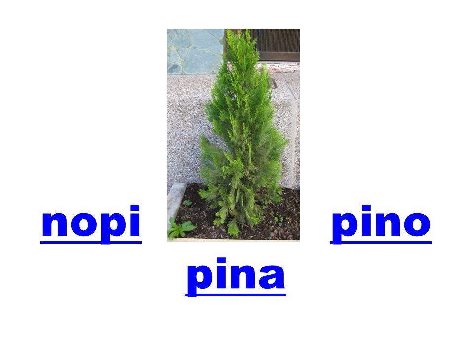 nopinopi pinopino pina