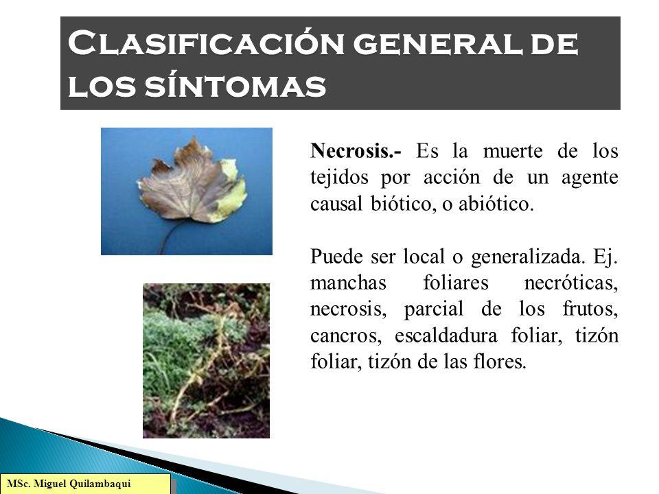 MSc. Miguel Quilambaqui Marchitamientos.- Déficit hídrico parcial o total de follaje y otros y órganos aéreos, producidos por patógenos que alteran la