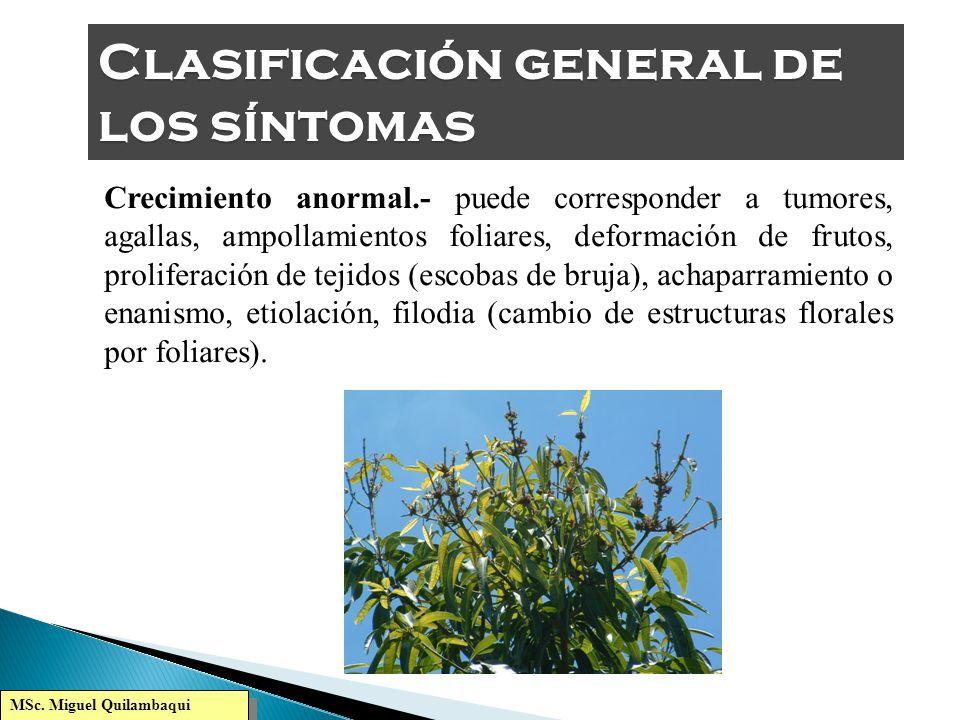 MSc. Miguel Quilambaqui Pigmentación anormal.- cambios de la pigmentación de los órganos aéreos y subterráneos de una planta que ocurren a causa de la