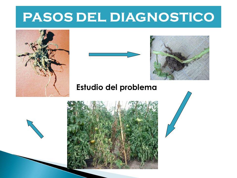 Es la determinación del o los factor/es patogénico/s que produce/n la enfermedad.