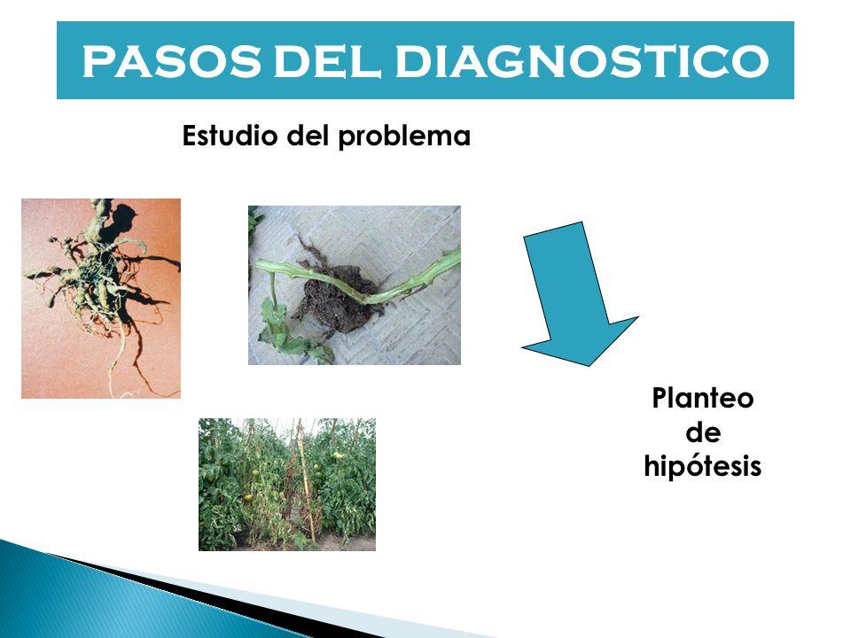 Incidencia.- Proporción de plantas enfermas con relación a un total por unidad de superficie. Severidad.- Es la proporción de tejido enfermo de una pl