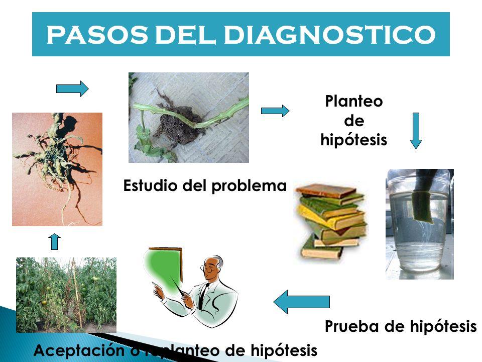 Diagnosis de las enfermedades de las plantas Patógeno o ambiente?