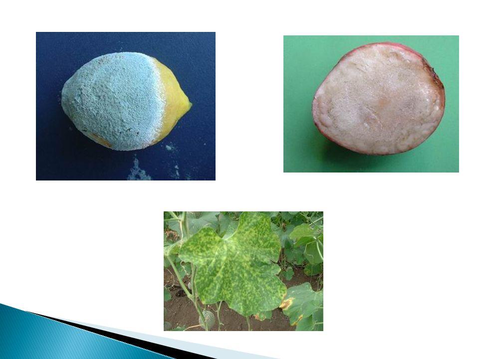 Incidencia.- Proporción de plantas enfermas con relación a un total por unidad de superficie.