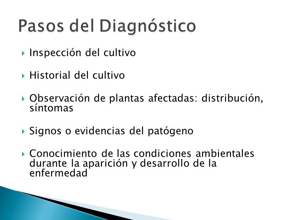 ¿QUE HACER? Se aisla e identifica un microorganismo, como posible causante de los síntomas observados.