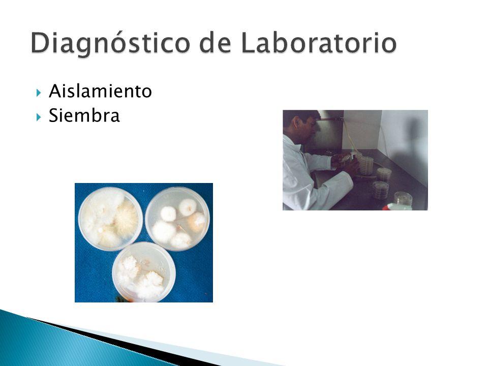 Inspección del cultivo Historial del cultivo Observación de plantas afectadas: distribución, síntomas Signos o evidencias del patógeno Conocimiento de