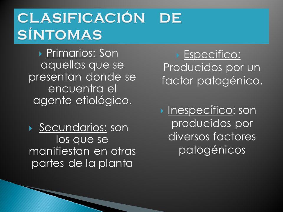 Síntoma: Son manifestaciones patológicas de la enfermedad que se dan en la planta Estas expresiones dependen de ella, del patógeno y del ambiente en e