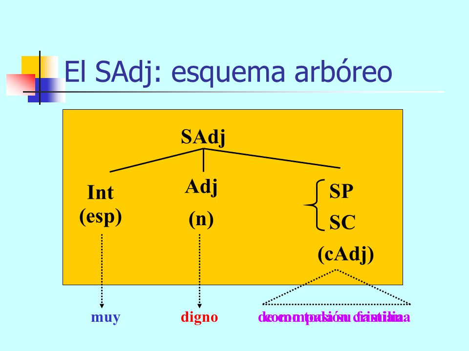 El SAdj: componentes SAdj = Int + Adj + espn SP SC cAdj