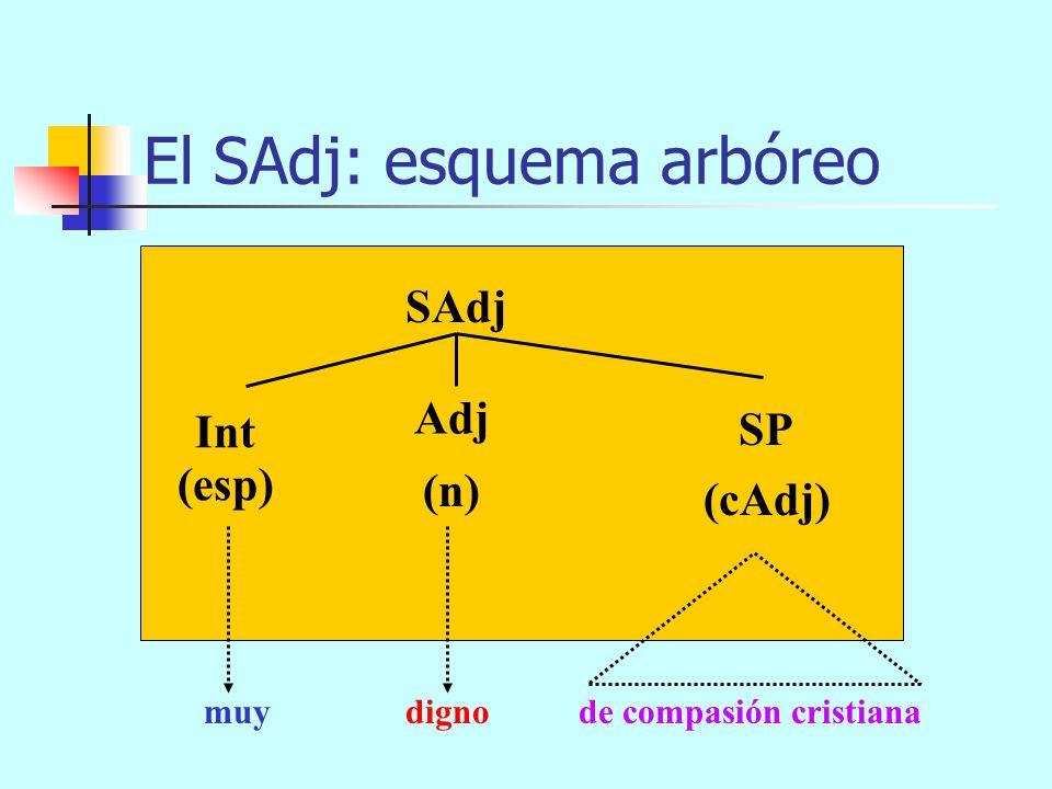 El SAdj: esquema arbóreo SAdj (n) (cAdj) Int Adj (esp) muydigno SP SC de compasión cristianacomo toda su familia