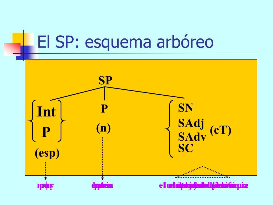 El SP: componentes SP = + P + espn SN SAdj SAdv SC cT P Int