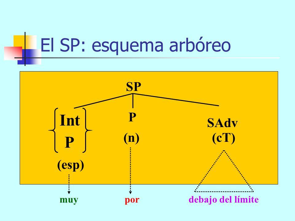 de muy mayor El SP: esquema arbóreo SP (n) (cT) P (esp) SAdj P Int de grande