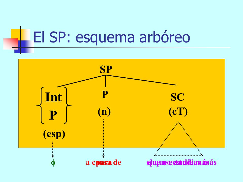 El SP: esquema arbóreo SP (n)(cT) P (esp) SAdv P Int muy por debajo del límite