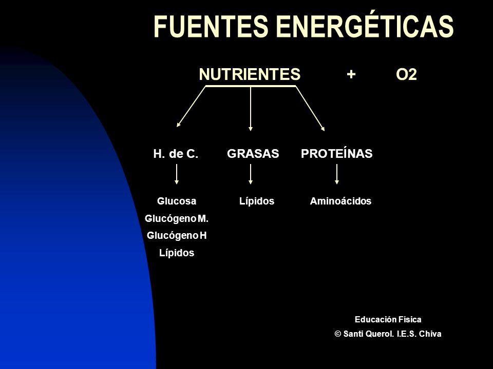 FUENTES ENERGÉTICAS NUTRIENTES+O2 H. de C.GRASASPROTEÍNAS Glucosa Glucógeno M. Glucógeno H Lípidos Aminoácidos Educación Física © Santi Querol. I.E.S.