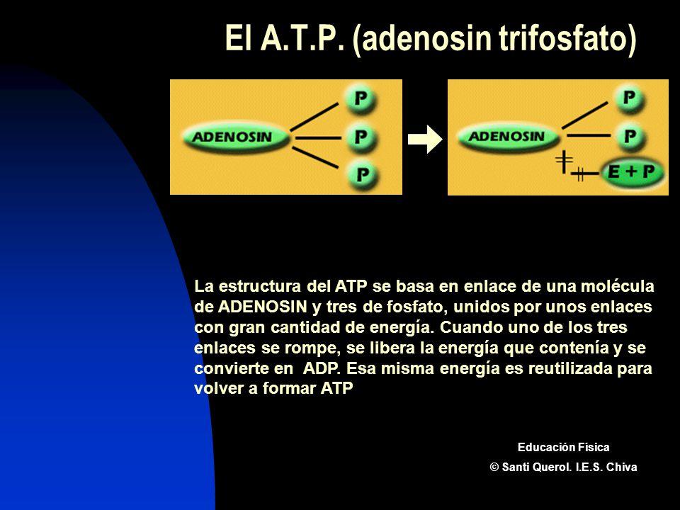 El A.T.P. (adenosin trifosfato) La estructura del ATP se basa en enlace de una molécula de ADENOSIN y tres de fosfato, unidos por unos enlaces con gra
