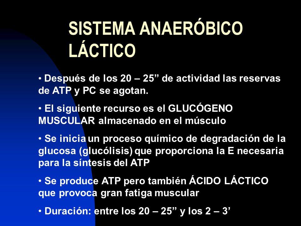 SISTEMA ANAERÓBICO LÁCTICO Después de los 20 – 25 de actividad las reservas de ATP y PC se agotan. El siguiente recurso es el GLUCÓGENO MUSCULAR almac
