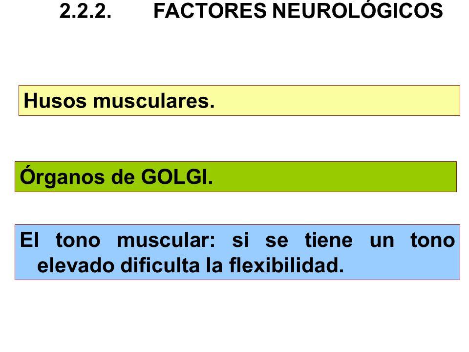Husos musculares. Órganos de GOLGI. El tono muscular: si se tiene un tono elevado dificulta la flexibilidad. 2.2.2.FACTORES NEUROLÓGICOS