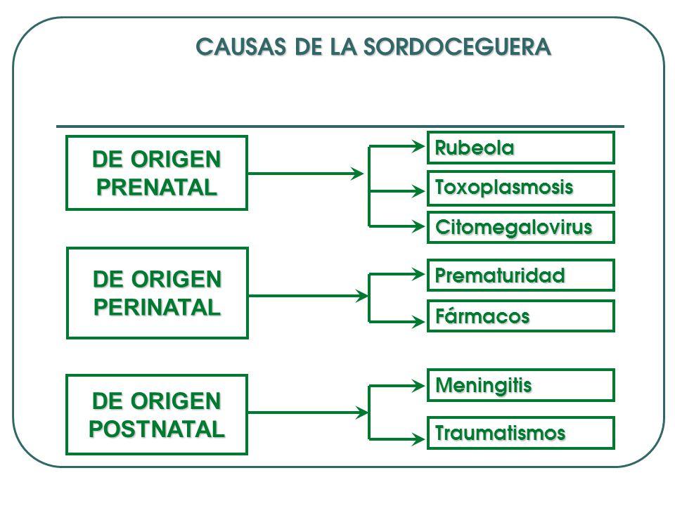 CAUSAS DE LA SORDOCEGUERA DE ORIGEN PRENATAL DE ORIGEN PERINATAL DE ORIGEN POSTNATAL Rubeola Citomegalovirus Prematuridad Fármacos Meningitis Traumati