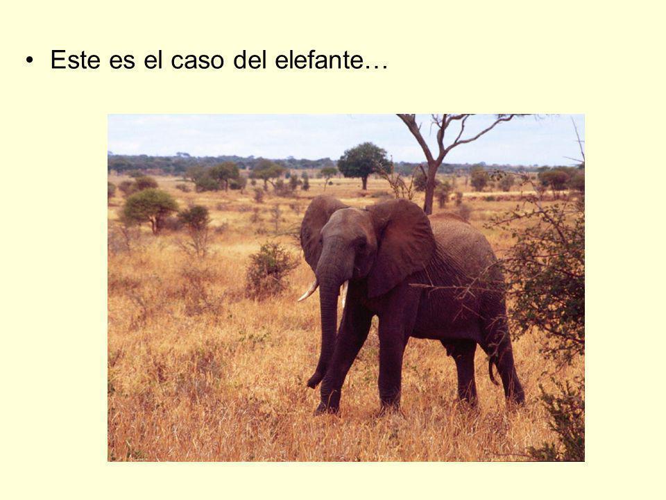 Este es el caso del elefante…
