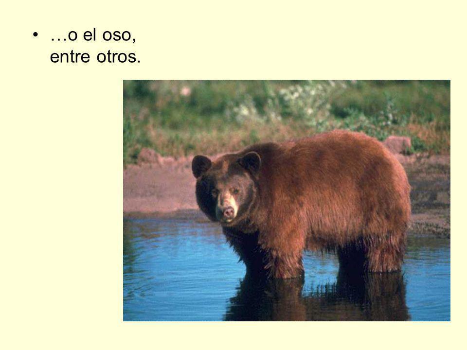 …o el oso, entre otros.