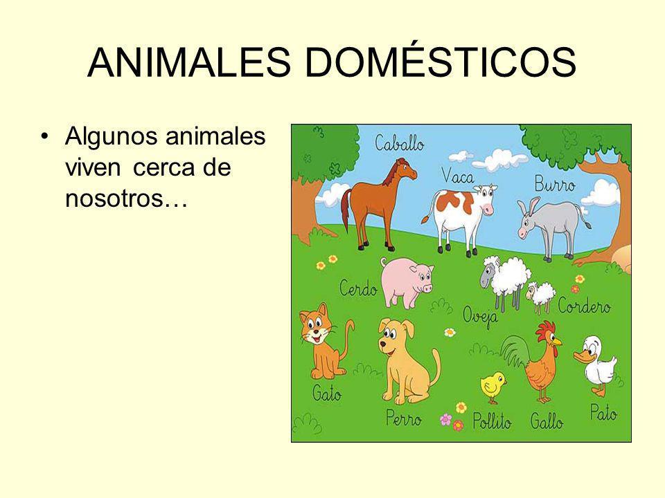 ANIMALES DOMÉSTICOS Algunos animales viven cerca de nosotros…