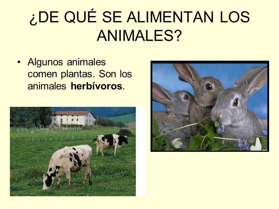 ¿DE QUÉ SE ALIMENTAN LOS ANIMALES? Algunos animales comen plantas. Son los animales herbívoros.
