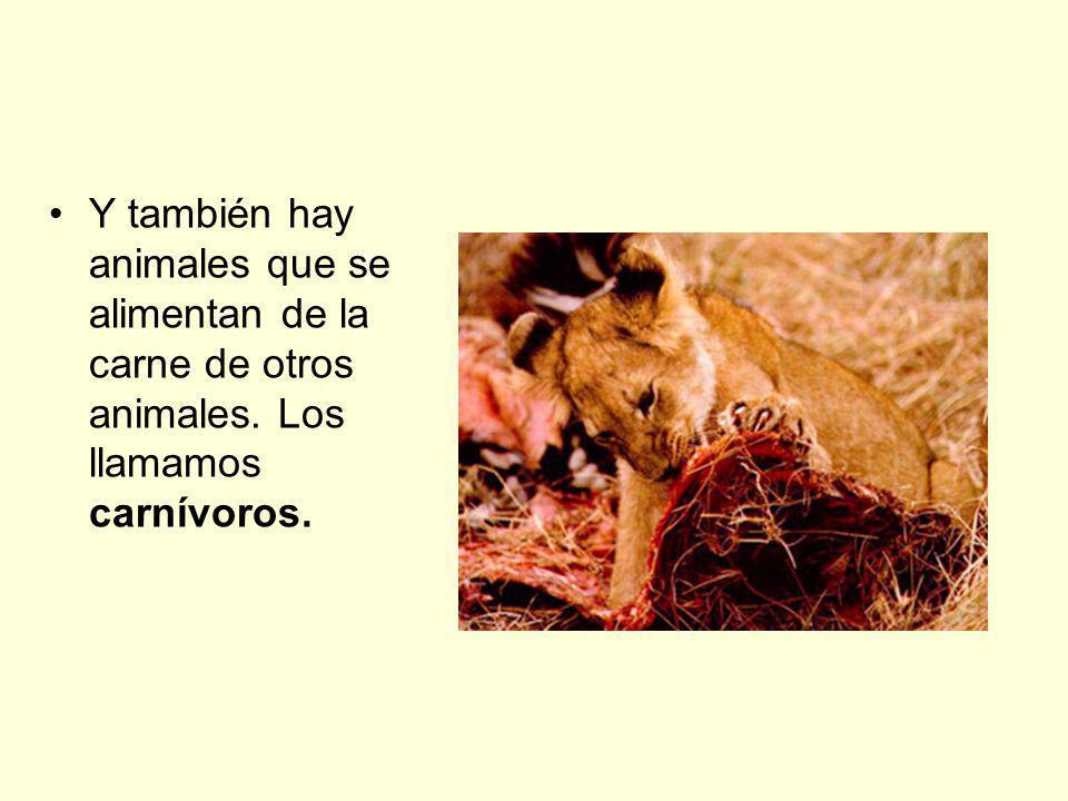 Y también hay animales que se alimentan de la carne de otros animales. Los llamamos carnívoros.