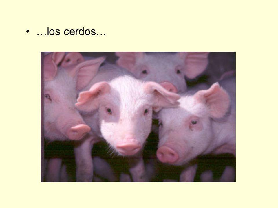 …los cerdos…