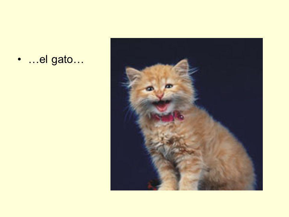 …el gato…