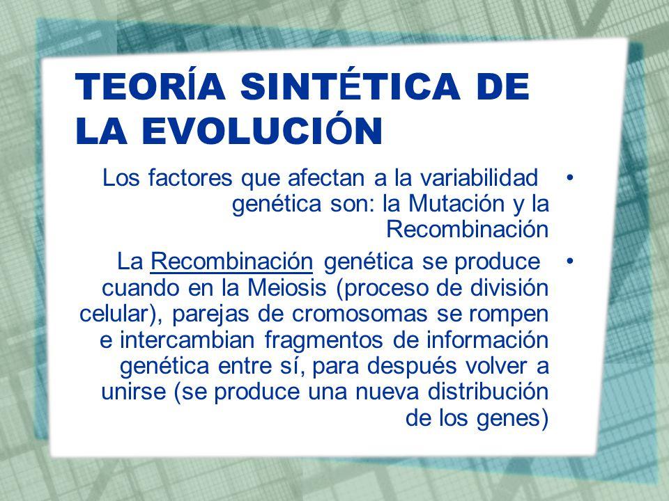 TEOR Í A SINT É TICA DE LA EVOLUCI Ó N Los factores que afectan a la variabilidad genética son: la Mutación y la Recombinación La Recombinación genéti