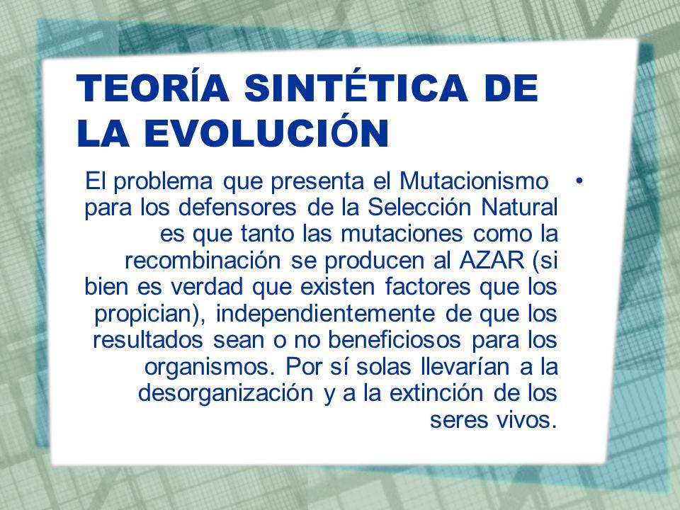 TEOR Í A SINT É TICA DE LA EVOLUCI Ó N El problema que presenta el Mutacionismo para los defensores de la Selección Natural es que tanto las mutacione