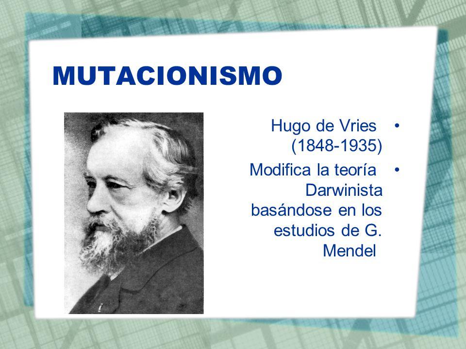 MUTACIONISMO Hugo de Vries (1848-1935) Modifica la teoría Darwinista basándose en los estudios de G. Mendel
