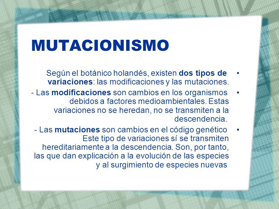 MUTACIONISMO Según el botánico holandés, existen dos tipos de variaciones: las modificaciones y las mutaciones. - Las modificaciones son cambios en lo