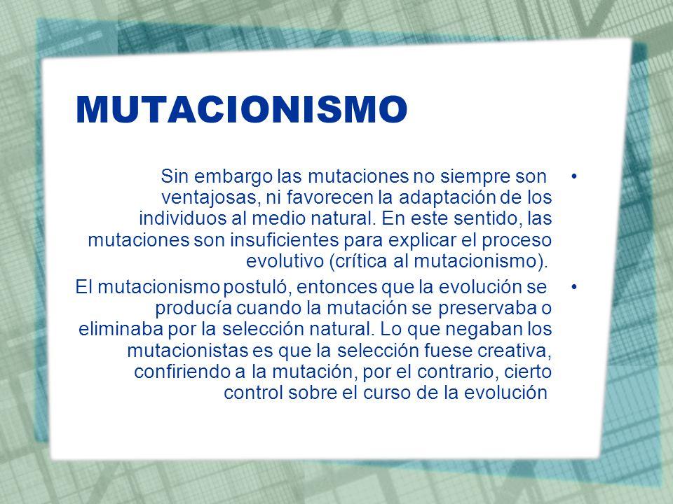 MUTACIONISMO Sin embargo las mutaciones no siempre son ventajosas, ni favorecen la adaptación de los individuos al medio natural. En este sentido, las