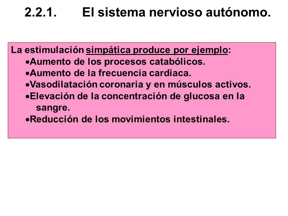 La estimulación simpática produce por ejemplo: Aumento de los procesos catabólicos. Aumento de la frecuencia cardiaca. Vasodilatación coronaria y en m