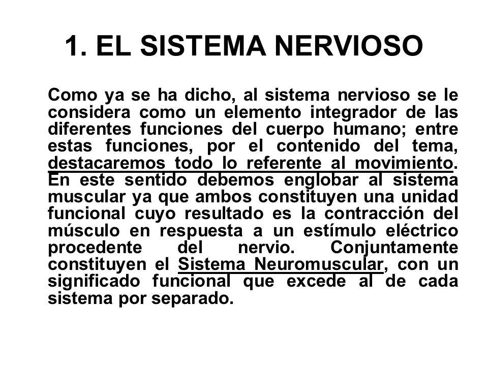 1. EL SISTEMA NERVIOSO Como ya se ha dicho, al sistema nervioso se le considera como un elemento integrador de las diferentes funciones del cuerpo hum