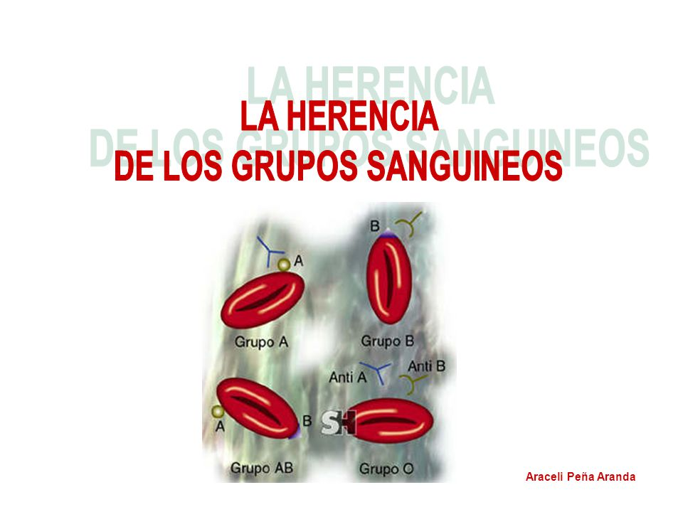 En la sangre, desde el nacimiento, ya existen en los glóbulos rojos (o eritrocitos o hematíes) unas proteínas complejas que actúan como antígenos (aglutinógenos) y en el plasma hay anticuerpos (aglutininas), que aglutinan y destruyen los glóbulos rojos que tengan el correspondiente aglutinógeno al ponerse en contacto sangres diferentes.