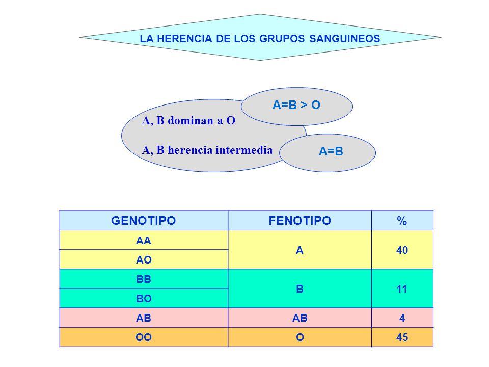 LA HERENCIA DE LOS GRUPOS SANGUINEOS A, B dominan a O A, B herencia intermedia A=B > O A=B GENOTIPOFENOTIPO% AA A40 AO BB B11 BO AB 4 OOO45