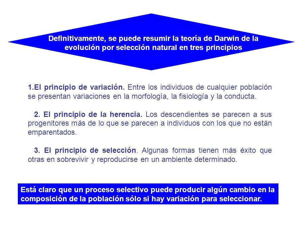 1.El principio de variación. Entre los individuos de cualquier población se presentan variaciones en la morfología, la fisiología y la conducta. 2. El
