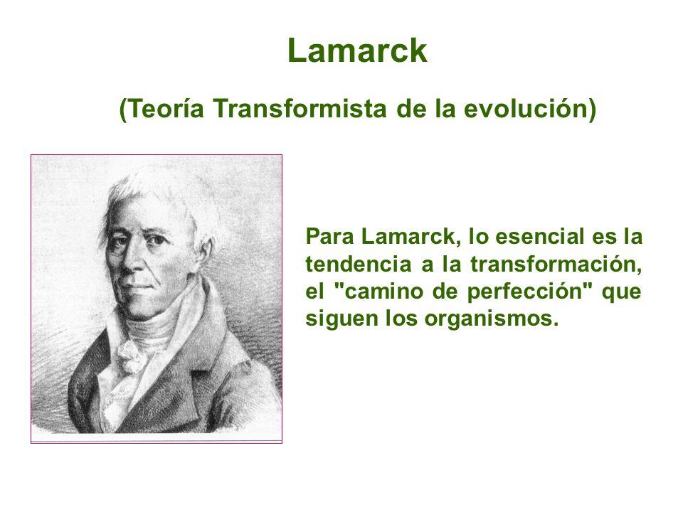 Lamarck (Teoría Transformista de la evolución) Para Lamarck, lo esencial es la tendencia a la transformación, el