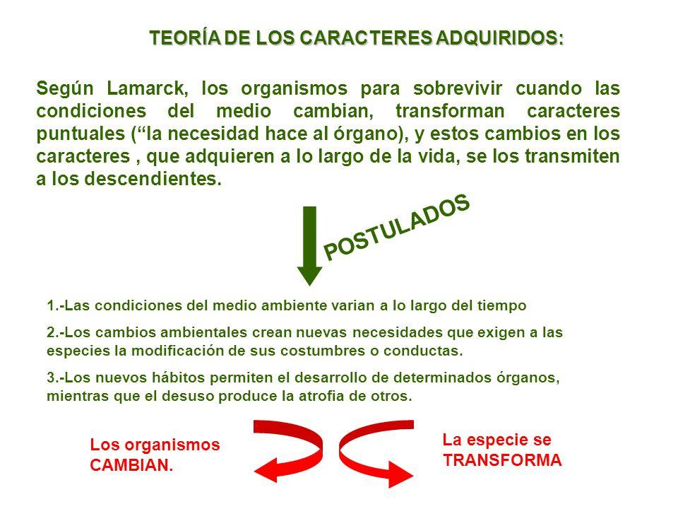 Según Lamarck, los organismos para sobrevivir cuando las condiciones del medio cambian, transforman caracteres puntuales (la necesidad hace al órgano)