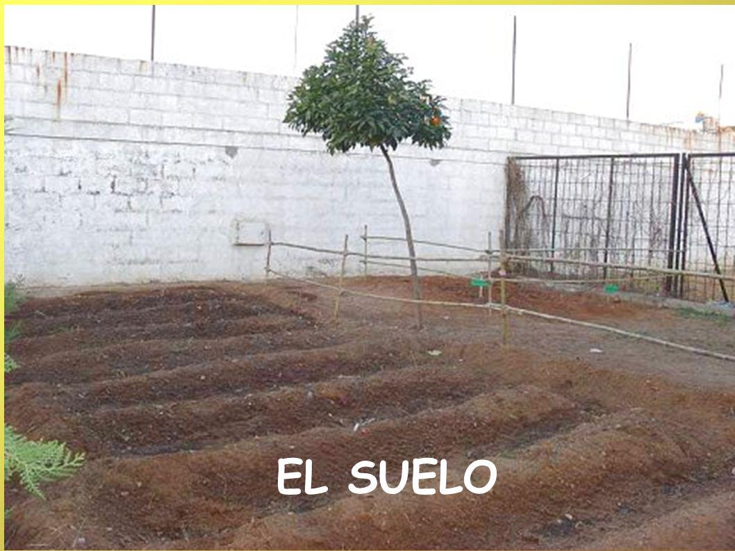 El suelo EL SUELO