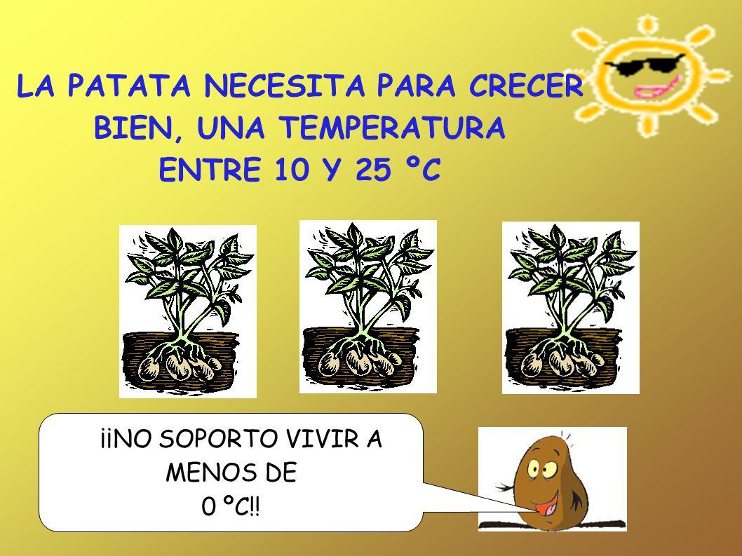 LA PATATA NECESITA PARA CRECER BIEN, UNA TEMPERATURA ENTRE 10 Y 25 ºC ¡¡NO SOPORTO VIVIR A MENOS DE 0 ºC!!