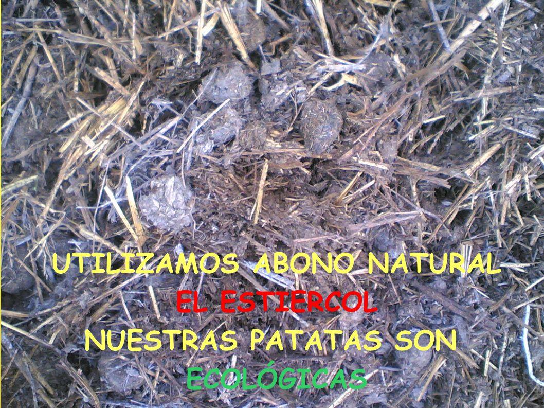 UTILIZAMOS ABONO NATURAL EL ESTIERCOL NUESTRAS PATATAS SON ECOLÓGICAS
